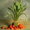 Food Conceptual Photographs Illustration